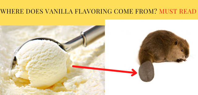 Where Does Vanilla Flavoring Come From Must Read